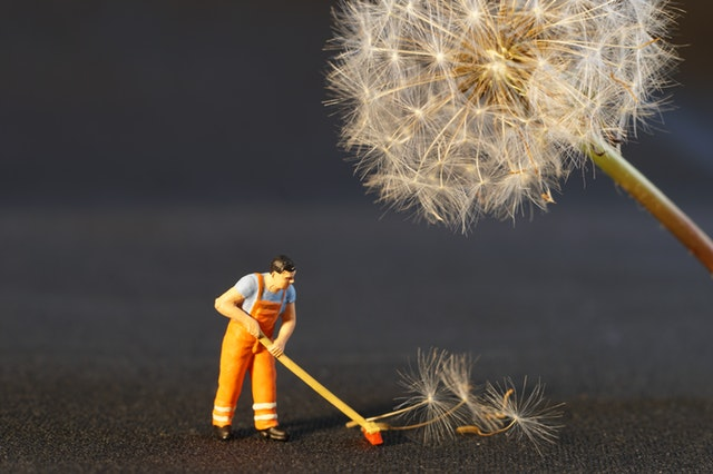 Absurdist photo of tiny man figurine sweeping up dandelion tufts next to big dandelion